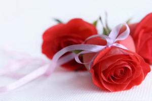 Bộ ảnh những bông hoa hồng đẹp lung linh thật khó cưỡng