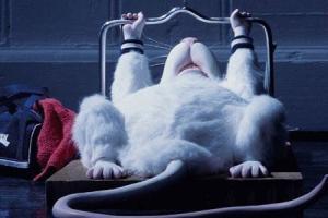 20 ảnh bìa facebook động vật hài hước  đẹp và ý nghĩa