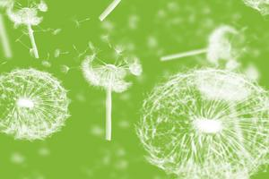 Chia sẻ  Dandelions Photoshop Brushes miễn phí