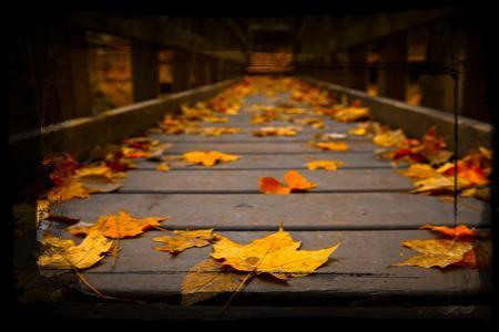 Chia sẻ 300 file png hình nền mùa thu đẹp