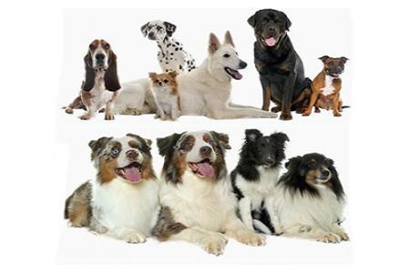 Chia sẻ file psd tài nguyên động vật con chó
