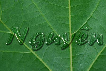 Chia sẻ file psd hiệu ứng chữ nước trên lá đẹp